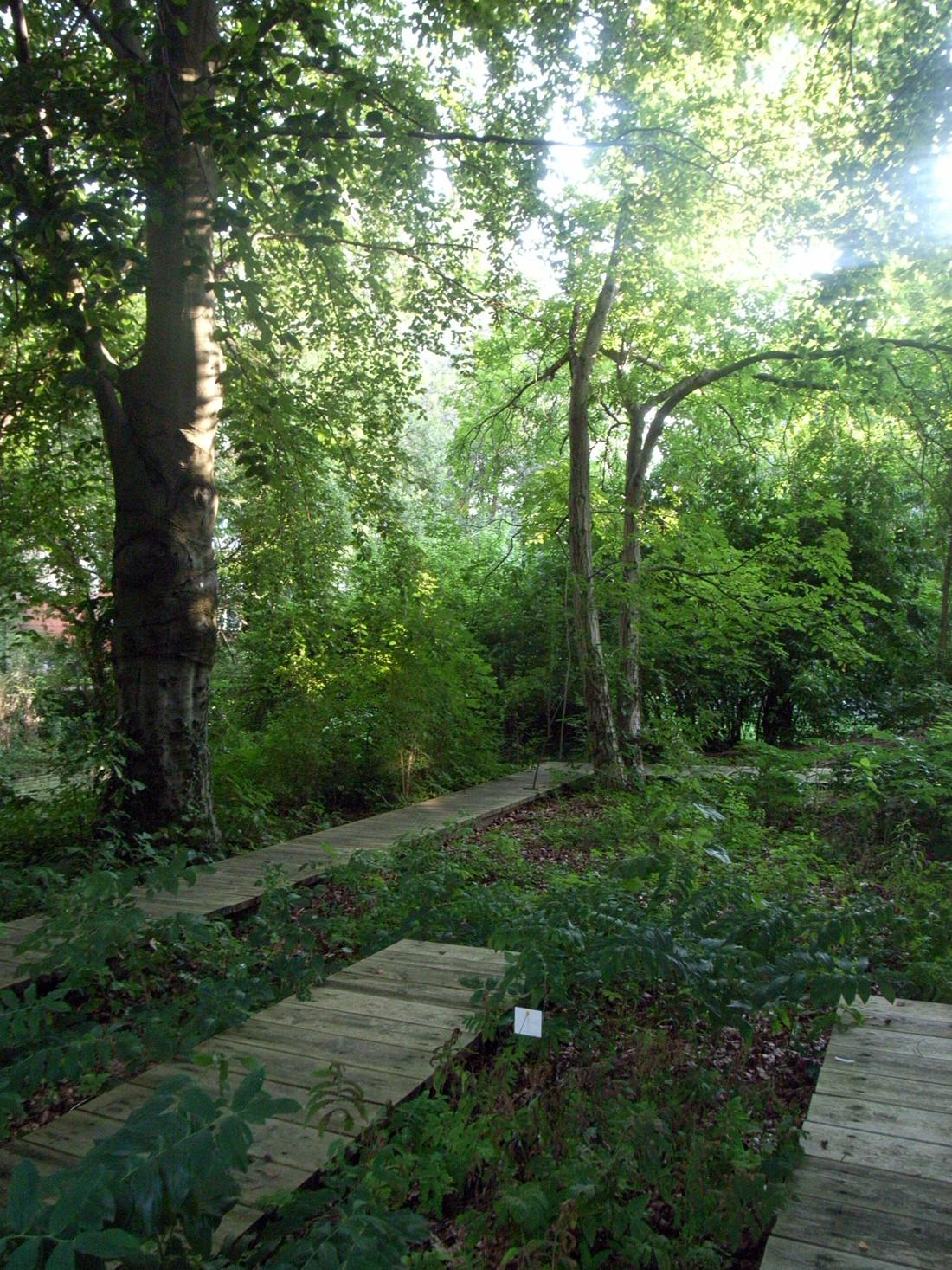 Schattengarten-foto-09
