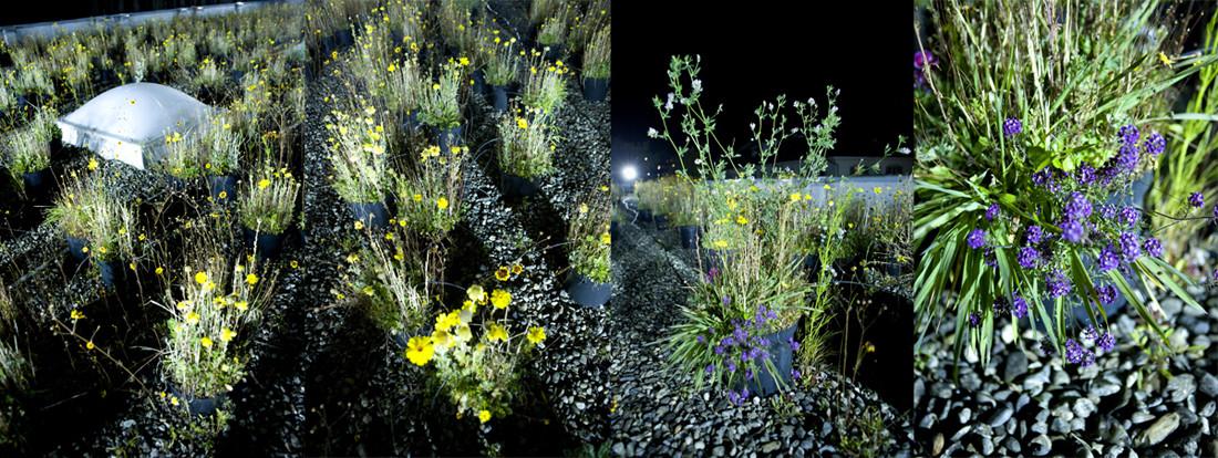 Golden-garden-lausanne-jardin-03